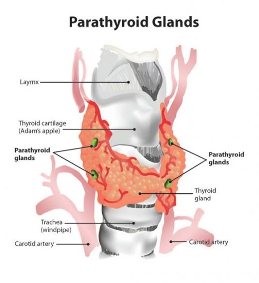 Paratiroid Adenomu Tedavisi
